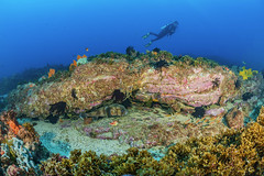 Merrin at Julian Rocks (merbert2012) Tags: nature fun nationalpark underwater pacific australia scuba diving fisheye byronbay marinepark tauchen underwaterphotography julianrocks nikond800 aquaticahousing