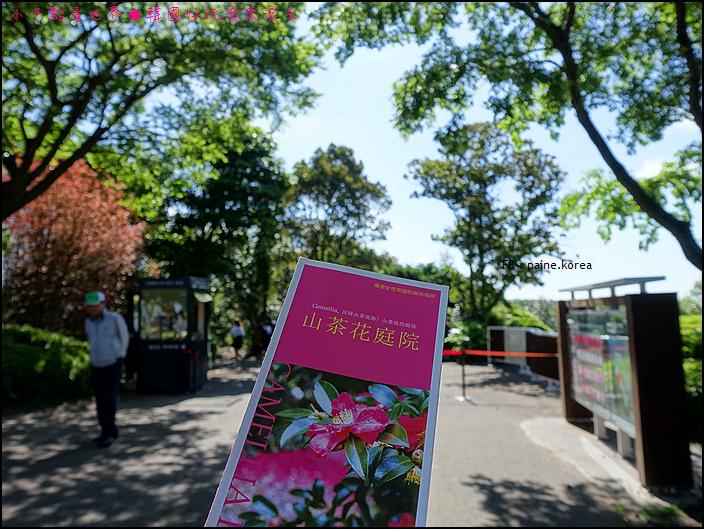 濟州山茶花庭院 (2).JPG