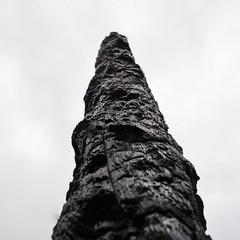 Burn Zone (wwwicz) Tags: wood trees sky bw white black tree monochrome fire colorado boulder burn charred