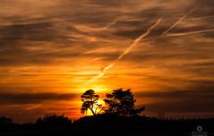Ode to the sky (Marc.van.Veen) Tags: trees sunset sky cloud color tree nature netherlands colors backlight clouds contrast landscape island dawn pentax outdoor stripes nederland nopeople serenity serene veluwe nofilter k50 kootwijkerzand landscapephotography marcvanveen