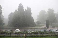 Beperkt Zicht door Zware Regen (josbert.lonnee) Tags: park rain weather outdoor rainfall regen buiten weer wolkbreuk limitedvisibility rainfalling rainburst regenval beperktzicht vallenderegen
