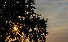 soleil toil (letfphoto) Tags: orange jaune soleil ciel arbre etoile couche