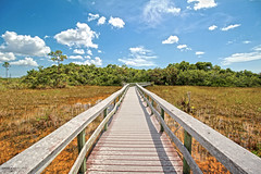 Mahogany Hammock Trail - Everglades National Park, Florida (Andrea Moscato) Tags: park wood blue trees light shadow sky orange parco usa white green nature clouds america landscape us nationalpark nuvole day pattern view unitedstates natural walk perspective vivid natura national cielo vista boardwalk np paesaggio statiuniti naturale andreamoscato