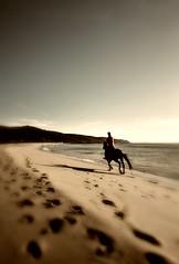 A casualidade e a presa. (Alberte Couto) Tags: galiza ferrol doniños acoruña cabalo albertecouto xinete