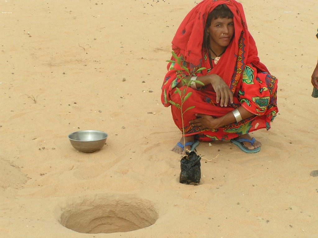 Repiquage de plantes dans le desert NGourtiTermit