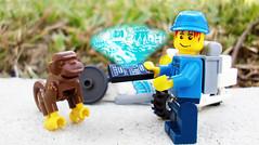 Day 330 (chrisofpie) Tags: chris pie monkey lego doug legos hero heroes minifig roger minifigure bluehat legohero chrisofpie rogeranddoug 365legos dougthechimp
