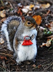 BIT OF FUN (Shaun's Nature and Wildlife Images....) Tags: fun squirrels shots shaund
