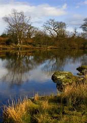 Room to breathe (steverichard) Tags: sky lake color colour reflection tree water beauty grass landscape scotland photo rocks warm image ripples loch foreground galloway lochan steverichard lochinbreck srichradimagescom