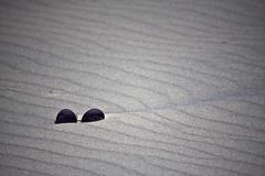 Long Island, New York (Bravo213) Tags: ocean light shadow people dog flower beach water sunglasses sand dune marsh organic cy jonesbeach longislandnewyork challengeyouwinner friendlychallenges thumbsupchallenge thechallengefactory herowinner pregamewinner