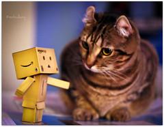 Friend or Foe?  Or Food.....? (montreal_bunny) Tags: november ariel cat canon rebel robot ef50mmf18ii t3i danbo highlandlynx 2011yip 3652011