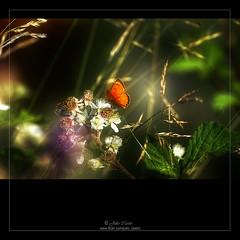Un sueño de ensueño (Julio_Castro) Tags: mountain field trekking butterfly nikon campo montaña mariposa senderismo nikond200 juliocastro olétusfotos