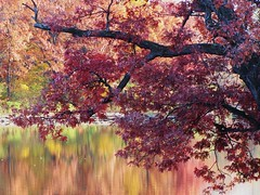 (Cher12861) Tags: autumn trees lake color green fall nature water beauty leaves reflections landscape branch redoak 2011 wheatonillinois burntred herricklakeforestpreserve