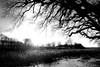 Gegenlicht (dubdream) Tags: winter blackandwhite bw sun white black germany landscape nikon explore sw d200 schwarzweiss schleswigholstein dubdream