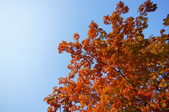 (**Alice**) Tags: red leaves wideangle bluesky romania  1020mm  frunze  rou cersenin braov