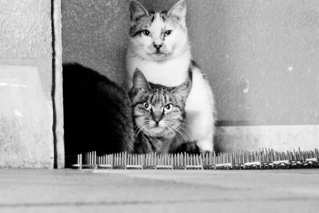Today's Cat@2011-12-09