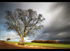 ,.......... (Chrisconphoto) Tags: tree canon landscape mood sigma 1020mm crank goodlight billinge