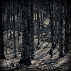 In search of itself ' (Orione59) Tags: trees tuscany bosco camaldoli ef70200f40l eos5dmarkii orione1959