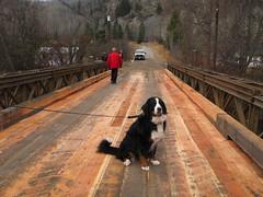 Louisa Bridge-Vega the dog (TranBC) Tags: bridge photo bc britishcolumbia greenwood 2011 westkootenay tranbc ministryoftransportationandinfrastructure newbridgeforgreenwood southerninteriorregion