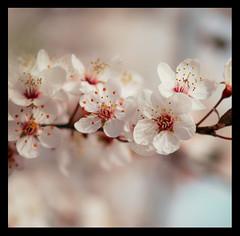 Calendario Chino (DGTX) Tags: santiago flores flower canon flor diego sancristobal araya corvalán 75150f35 75150 ltytrx5 seriee t2i ltytr2 ltytr1 dgtx arayacorvalan