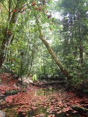 (HotDuckZ) Tags: red pen thailand leaf nationalpark maple olympus jpeg loei northernthailand   phukradung sooc phukradueng      epl3