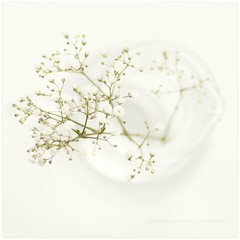 White on White (Samantha Nicol Art Photography) Tags: white flower macro art glass square soft babies dof bokeh breath jar jug elegant samantha delicate nicol