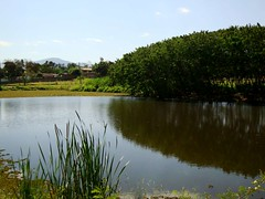 Aude do Peanha 2 (Rodrigo C. trevisan) Tags: water gua flickr reflexos aude sojoodaboavista audedopeanha