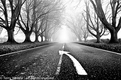 Keep on the right side! (Terry Yarrow) Tags: road uk morning travel autumn trees light england blackandwhite mist sign canon landscape woods transport atmosphere direction dorset avenue beech contrejour possibles eos5d badburyrings