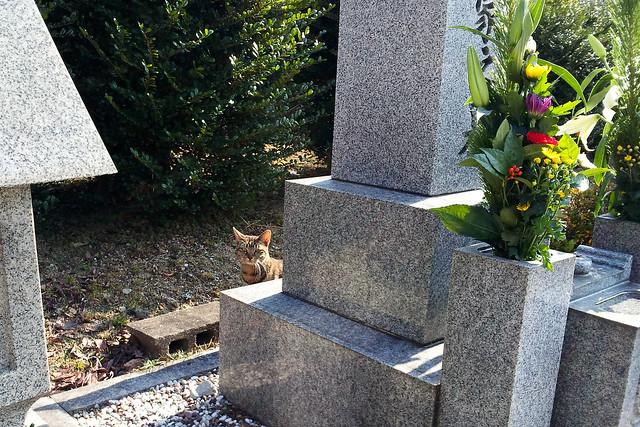 Today's Cat@2012-01-02