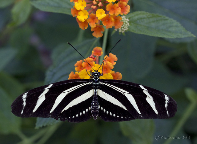 Vlindervallei