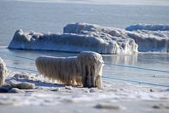 014_edited-1 (courtneyureel) Tags: snow chicago ice frozen december snowy lakemichigan freeze 2010 icebound
