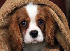 Us little dogs (Team Hymas) Tags: gibbs shirleen teamhymas hymasimages