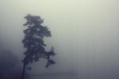 tree (donchris!) Tags: trees tree fog nebel arbres rbol nebbia albero bume arbre niebla baum brouillard mga drzewo drzewa
