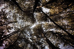 There's no best heaven than yours (Jess Gutirrez Gmez) Tags: santa blue parque sky azul pine forest de colombia bosque cielo elena pinos medelln antioquia arv jessgutirrezgmez