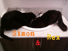 "simon & rex • <a style=""font-size:0.8em;"" href=""http://www.flickr.com/photos/73968363@N02/6676919233/"" target=""_blank"">View on Flickr</a>"