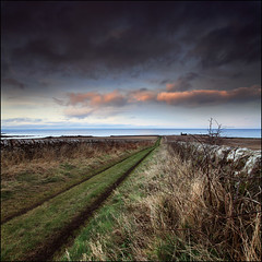 The Road to Babbet Ness (angus clyne) Tags: road old winter light sunset sea cliff cloud storm beach rain st stone wall golf coast scotland town fishing weed track andrews angle fife angus path walk farm north wide ruin scottish east coastal ness bramble firth clyne bothy babbet colorphotoaward babbetness vertorama canon5dmarkii