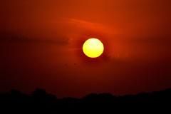 Shadow of the Sun (Ra Moyano) Tags: red sky orange cloud sun sol argentina birds yellow clouds contrast circle atardecer dawn rojo nikon buenos aires amarillo pajaros cielo nubes villa contraste naranja nube circulo 2012 gesell d3100