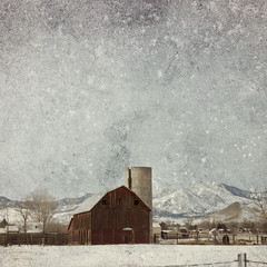 This Old Barn (Cat Girl 007) Tags: winter snow texture barn square colorado farm country niwot florabella neighya magicunicornverybest