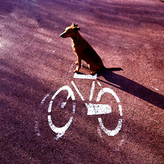 371 hop on your bike ! (edartr) Tags: dog chien smile bike bicycle sign boulevard graphic pavement humor canine perro sit furryfriday oostvoorne pinscher k9 fiets fietspad whitebike thelittledoglaughed ldlnoir