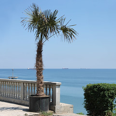 Baroque // Palm tree (stanimir.stoyanov) Tags: sea tree palm bulgaria baroque burgas