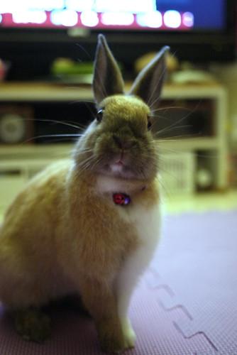 兔-NANA_31