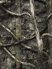 climbing roots (Daniella Keen) Tags: flowers white black nature leaves wheel sepia river landscape mushrooms scenery natural roots stems multiple dried exposed driedflowers layered rusing rustig multipleexposed poleroid naturistic