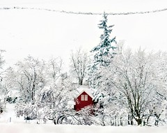 Snowed In {Explore Front Page} (Darrell Wyatt) Tags: trees windows winter snow ice oregon farmhouse fence farm rufus fenceline wintry redfarmhouse lovesnowintrees