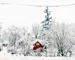 Snowed In {Explore Front Page} (Darrell Wyatt) Tags: trees windows winter snow ice oregon farmhouse fence farm rufus fenceline wintry redfarmhouse lovesnowintrees