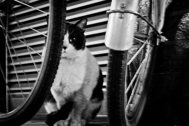 Today's Cat@2012-01-22