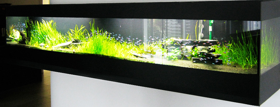 the world 39 s best photos of aquaristik and aquascaping flickr hive mind. Black Bedroom Furniture Sets. Home Design Ideas