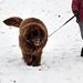 Grafton Lakes Winterfest 2012 - Grafton, NY - 2012, Jan - 16.jpg by sebastien.barre