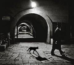 The Follower (Violet Kashi) Tags: old city light blackandwhite bw man film night cat noir arch shadows jerusalem hasidic