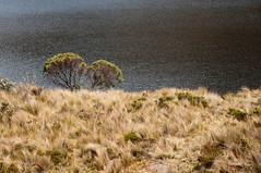 Lakeside Bushes (wenzday01) Tags: park travel lake plant nature water nationalpark ecuador nikon nikkor bushes cuenca d90 parquenacionalcajas azuay elcajas nikond90 elcajasnationalpark 18105mmf3556gedafsvrdx