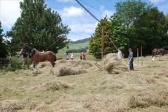 Waikato Heavy Horse Association Haymaking Day (lancef2) Tags: hay haymaking waikatoheavyhorseassociation