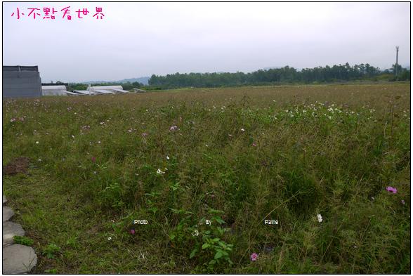 古坑半日遊 (55).JPG